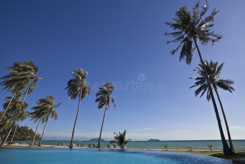 Piscina y palmeras. imagen de archivo
