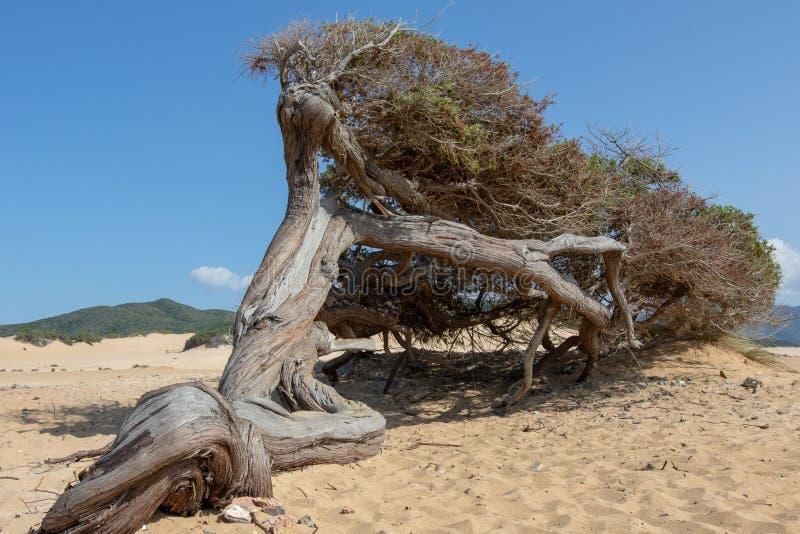 Piscinas dyn, Sardinia Italien royaltyfria bilder