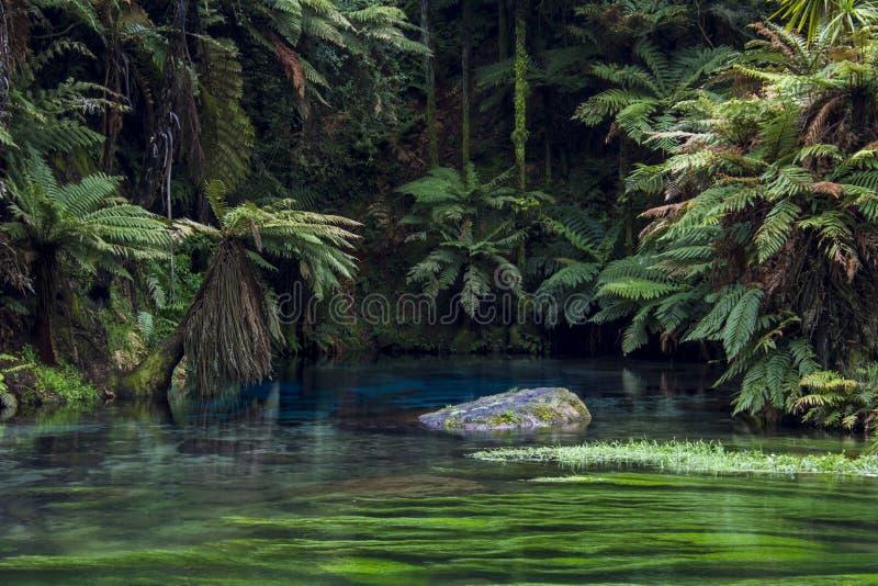 Piscine bleue renversante et eau clair comme de l'eau de roche en ressort bleu du ` s du Nouvelle-Zélande, Waikato au Nouvelle-Zé images stock