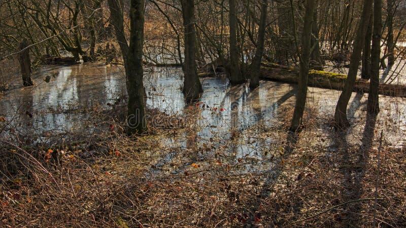 Piscine congelée sur le plancher de forêt photos libres de droits