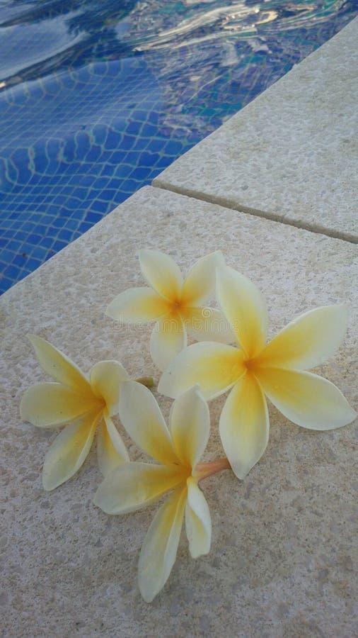 Piscine de fleur images stock