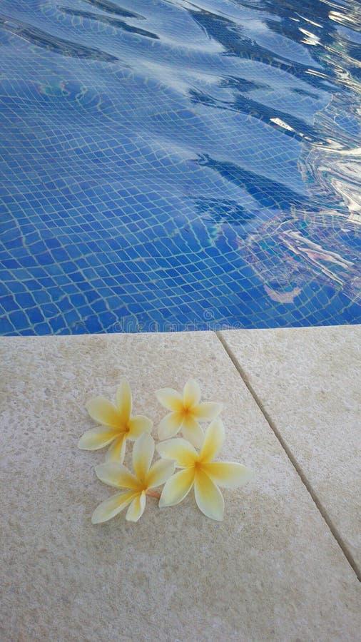 Piscine de fleur image libre de droits