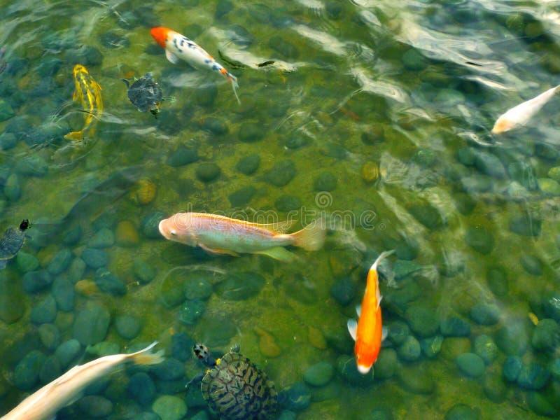 Piscine de poissons photographie stock libre de droits