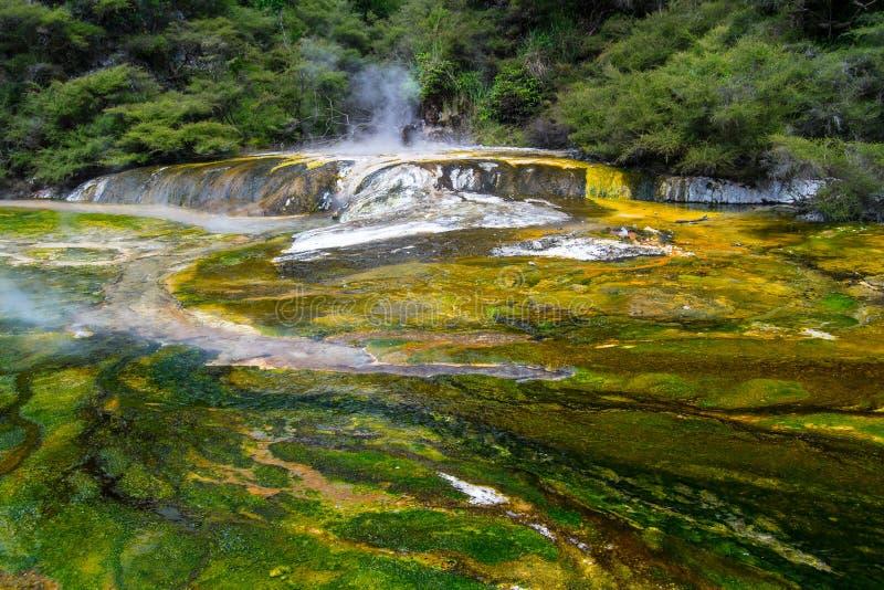 Piscine thermique ? la vall?e volcanique de Waimangu dans Rotorua, ?le du nord, Nouvelle-Z?lande image stock
