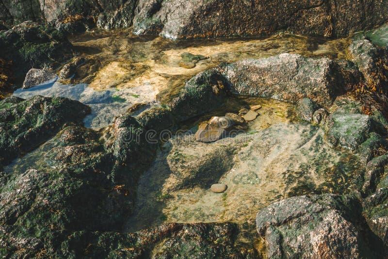 Piscines de l'eau dans les roches avec de la mousse verte images stock