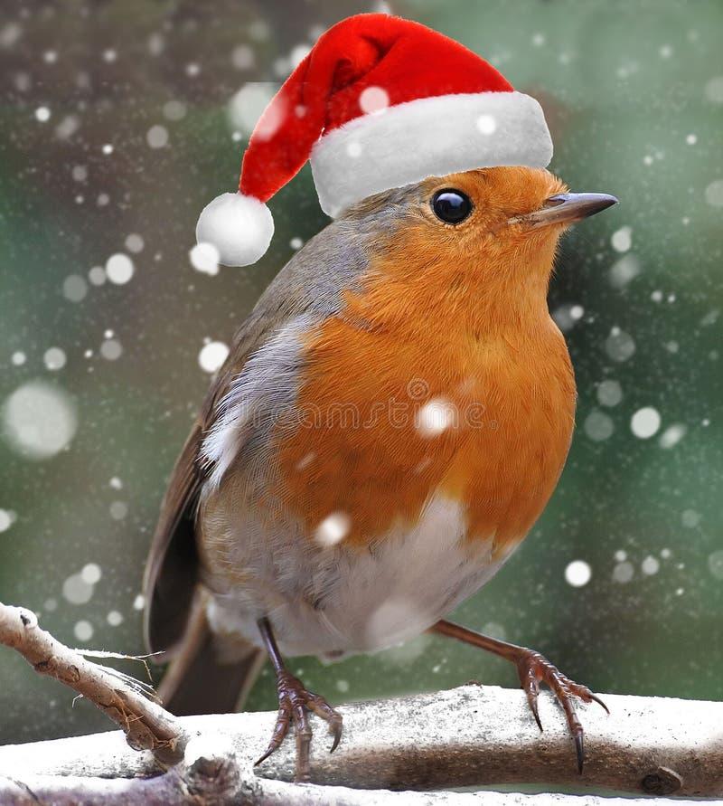 Pisco de peito vermelho do Natal vestido como Santa Claus imagens de stock royalty free