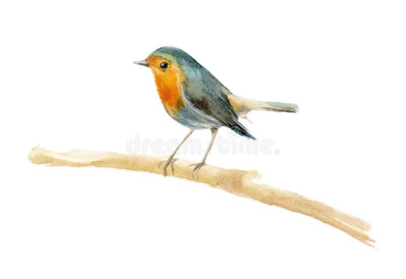Pisco de peito vermelho do pássaro da aquarela Elemento para o projeto dos cartazes, convites do casamento, composições do Natal  ilustração do vetor