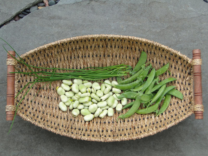 Piselli, fagioli di fava ed erba cipollina fotografie stock libere da diritti