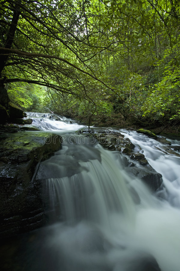 pisgah nazionale della foresta dell'insenatura di connestee fotografia stock