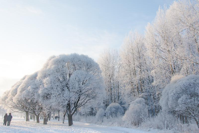 Piskarevsky公园在一多雪的天 库存照片