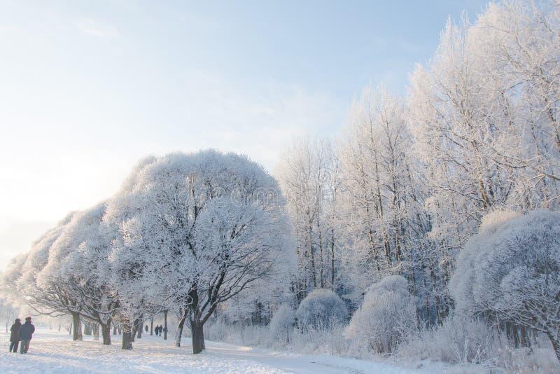 Piskarevsky park na śnieżnym dniu zdjęcie stock
