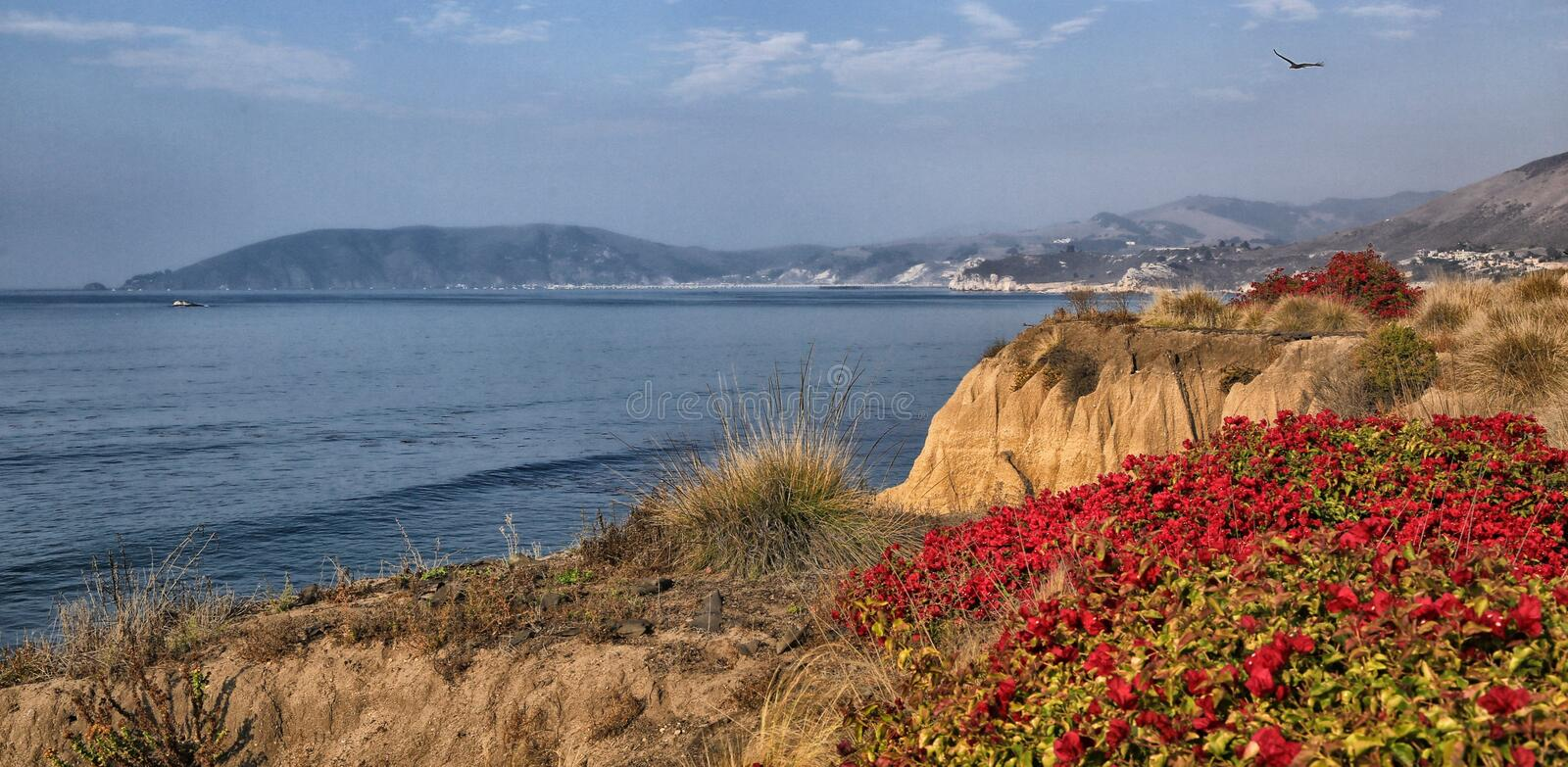 Pismo Beach seaside cliffs. Red flower topped seaside cliffs at Pismo Beach California royalty free stock images