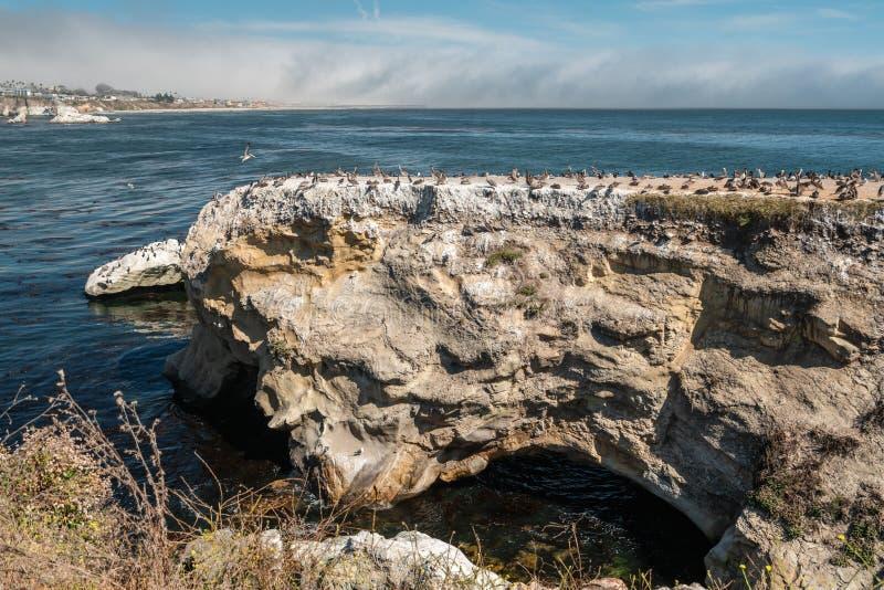 Pismo strandklippor och stor grupp av fåglar, Kalifornien kustlinje arkivbild