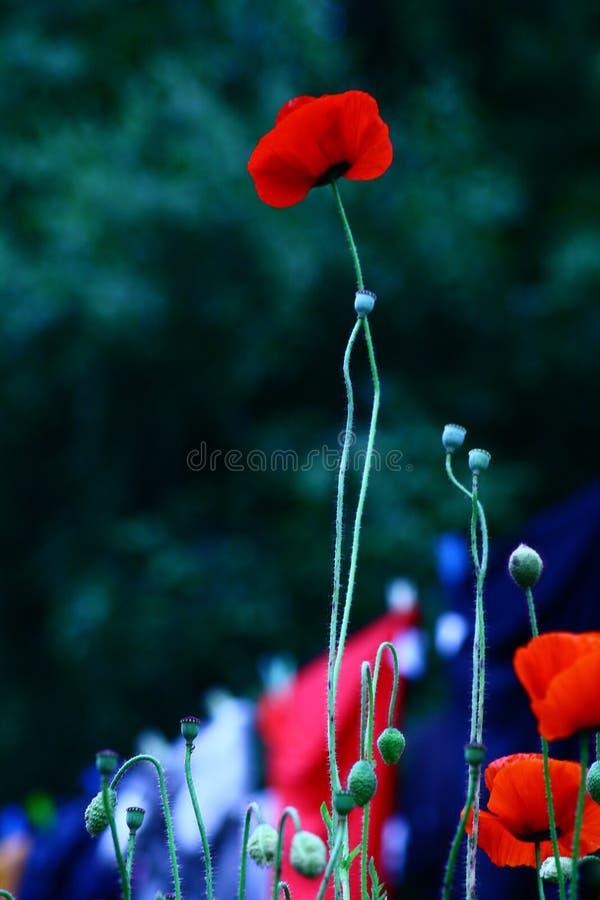 Piso; colorete; ciel; jardín; gouttes fotografía de archivo libre de regalías