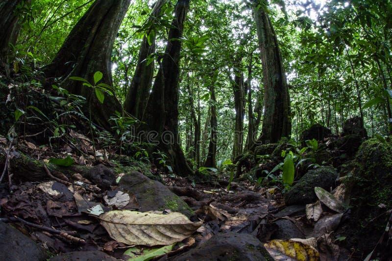 Piso de la selva tropical tropical fotografía de archivo libre de regalías