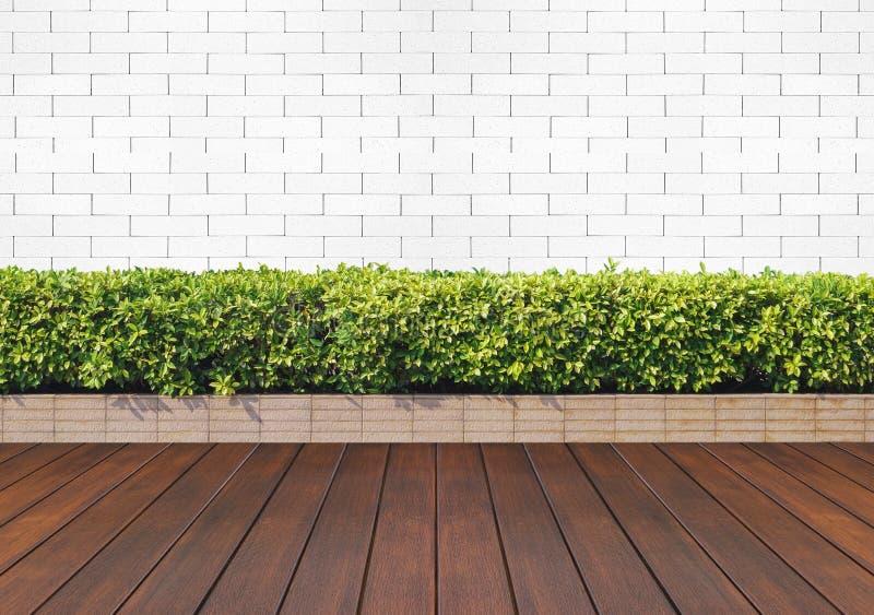 piso de madera con la planta y el ladrillo blanco imagen de archivo