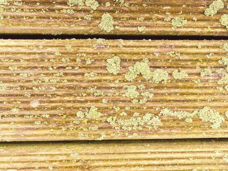 Piso de madera del granero natural con la cubierta verde del musgo o del liquen Tablones o tableros de madera duros fotos de archivo libres de regalías