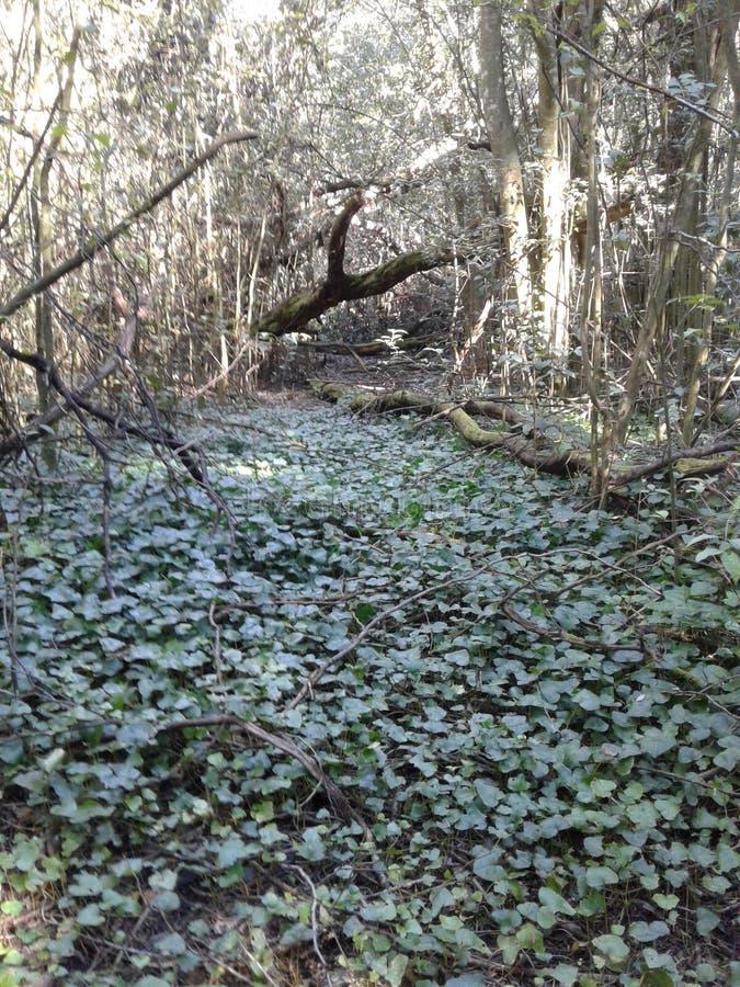 Piso del bosque por completo de vides imagen de archivo