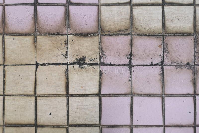 Piso tejado en manchas y hongo de la selección del uso erróneo del retrete El concepto de humedad y de dir fotografía de archivo libre de regalías