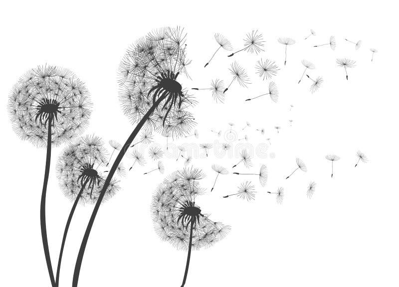 Pissenlit abstrait de pissenlits avec des graines de vol illustration libre de droits