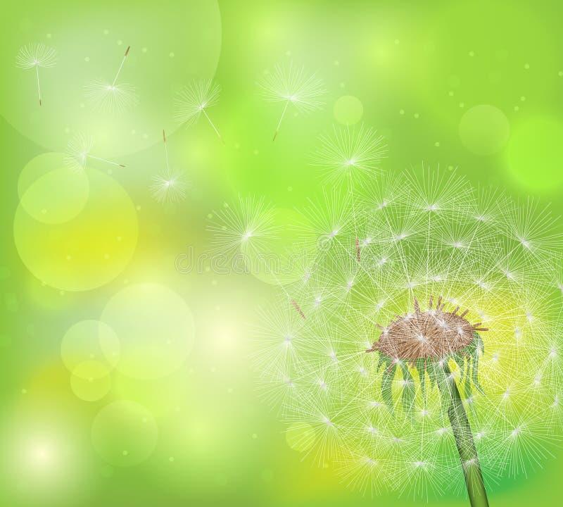 Pissenlit sur un fond vert avec des points culminants photographie stock