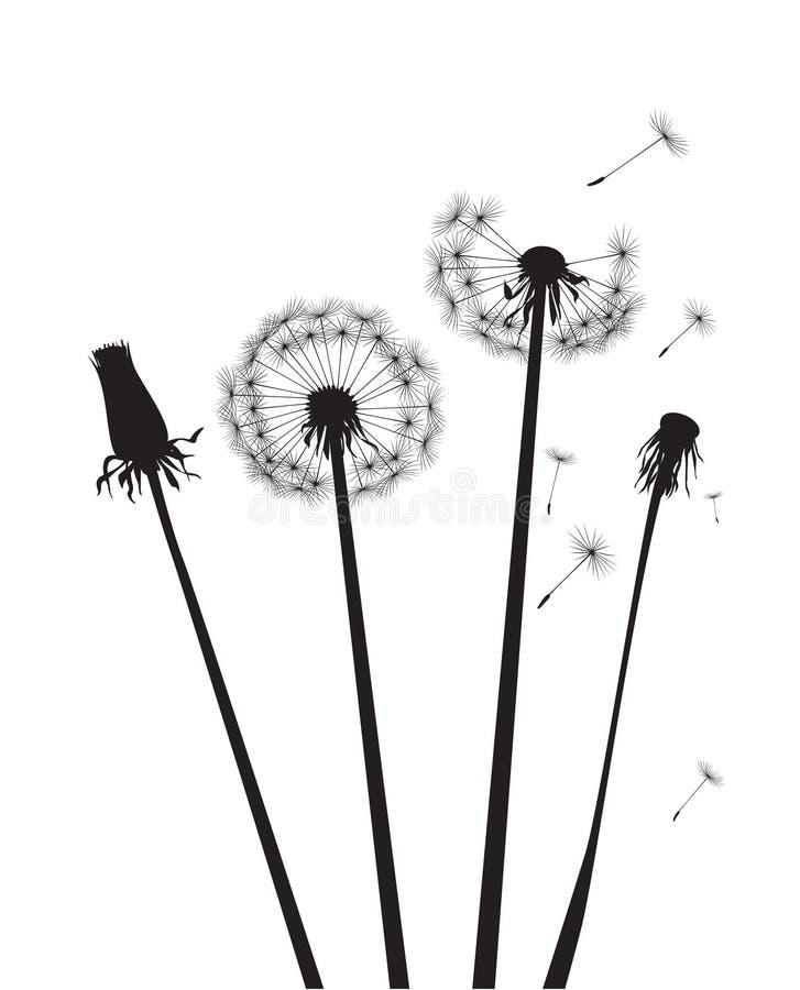Pissenlits noirs de silhouette Illustration de vecteur Silhouet noir illustration libre de droits