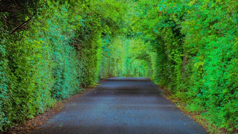 Pista arborizada da plantação de Farmington, Louisville Kentucky fotografia de stock royalty free