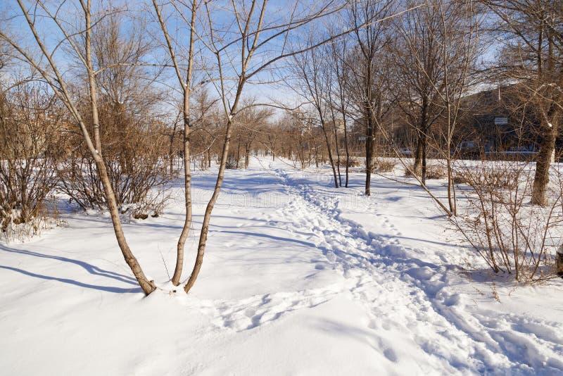 Pista attraverso il parco nell'inverno fotografia stock