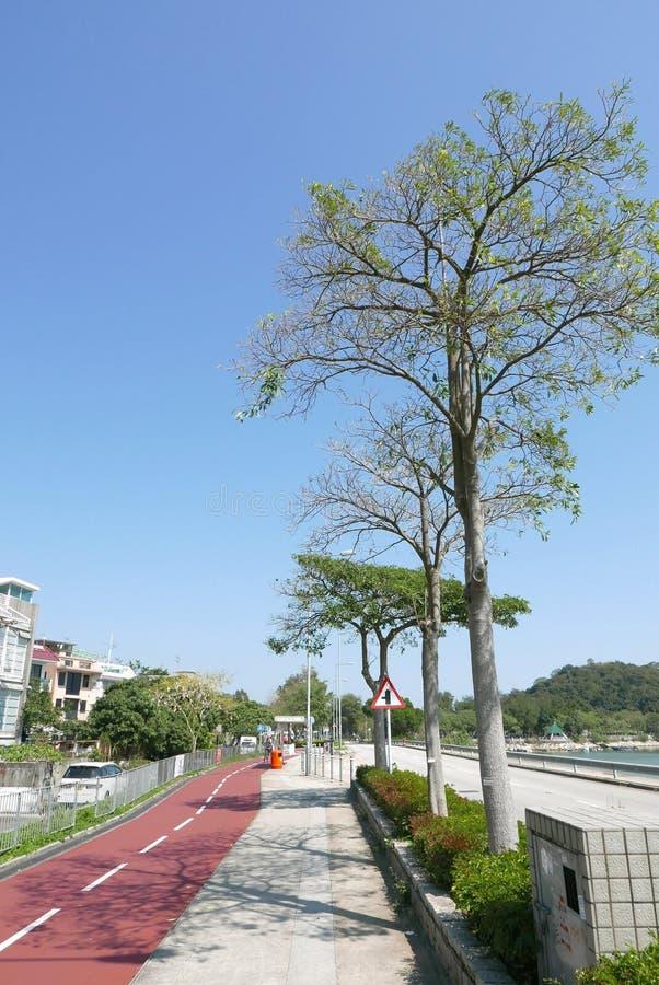 Pista ciclabile, alberi e sentiero per pedoni vicino al lago immagini stock