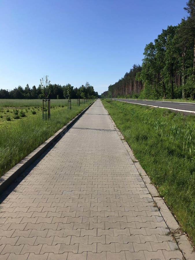 Pista ciclabile lungo la foresta immagini stock libere da diritti