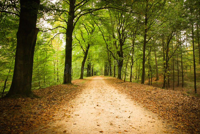 Pista da floresta foto de stock royalty free