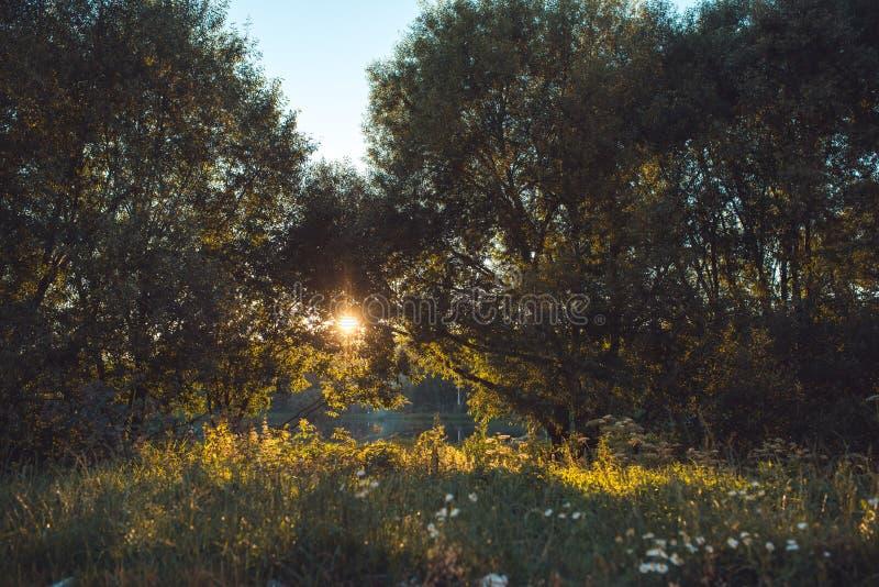 Pista da floresta na mola atrasada na luz solar ilustração do vetor