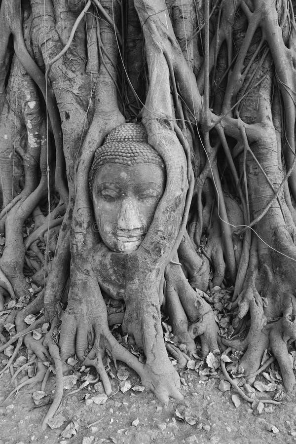 Pista de Buddha, Ayuthaya fotos de archivo libres de regalías