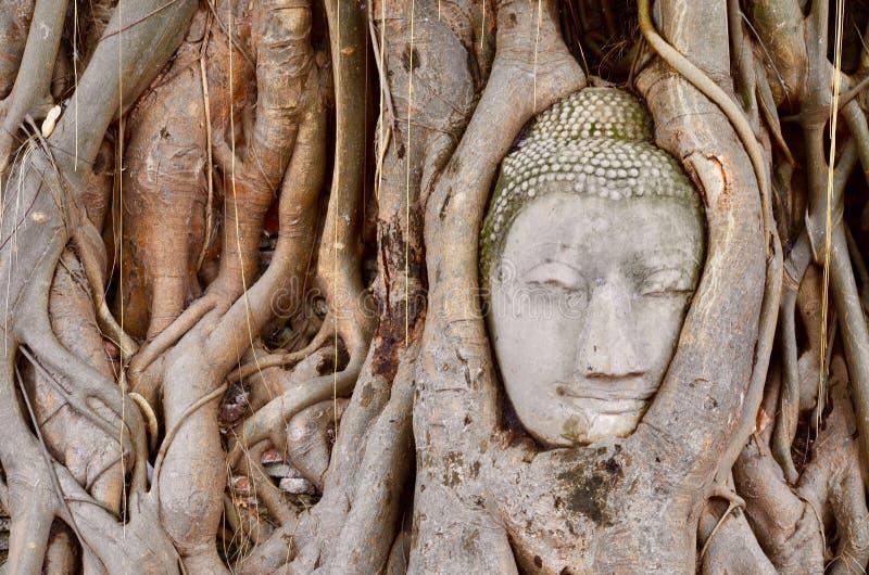 Pista de Buddha en el árbol fotos de archivo