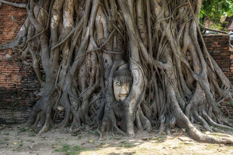 Pista de Buddha en raíces del árbol fotos de archivo libres de regalías