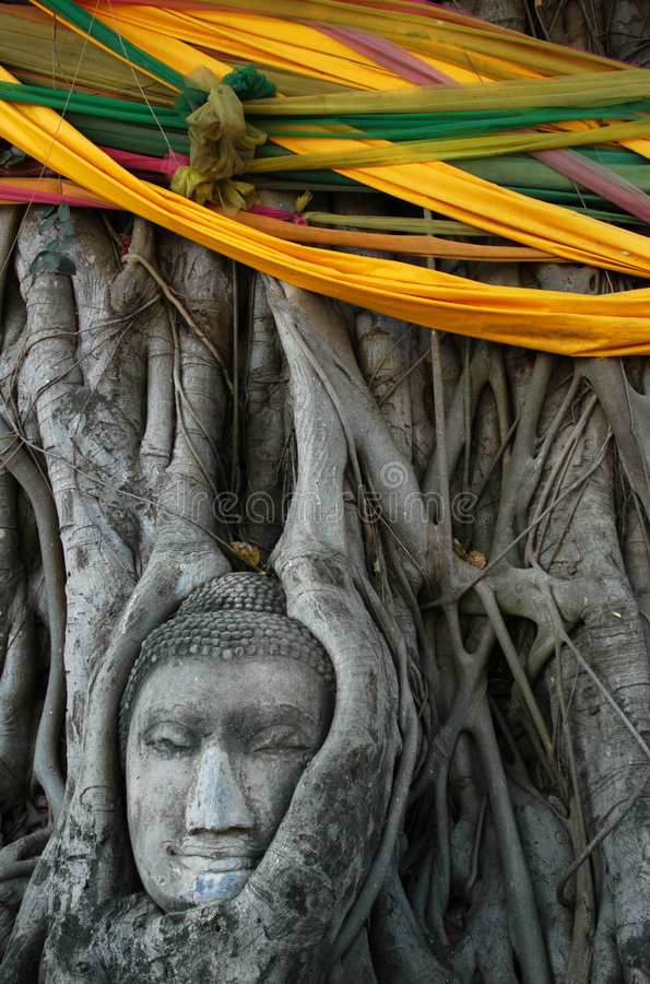 Pista de Buddha rodeada por Roots imagen de archivo