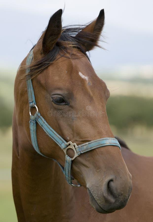 Pista de caballo fotografía de archivo libre de regalías