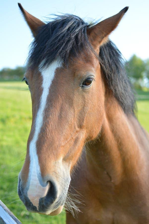 Pista de caballo 4 imagen de archivo libre de regalías