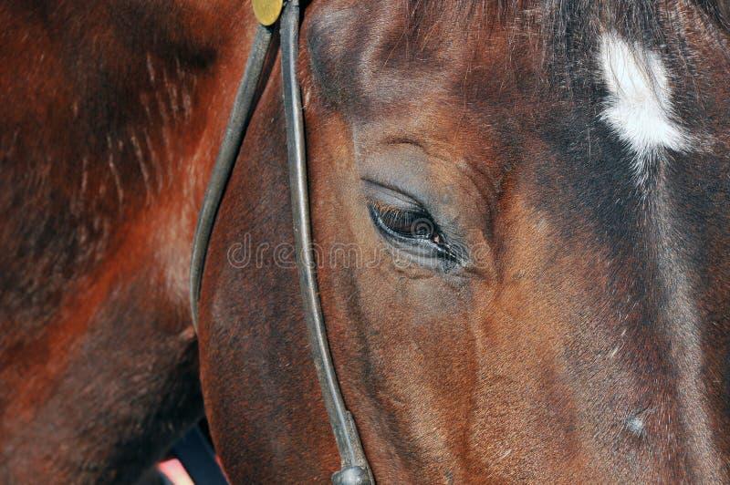 Pista de caballos imagen de archivo