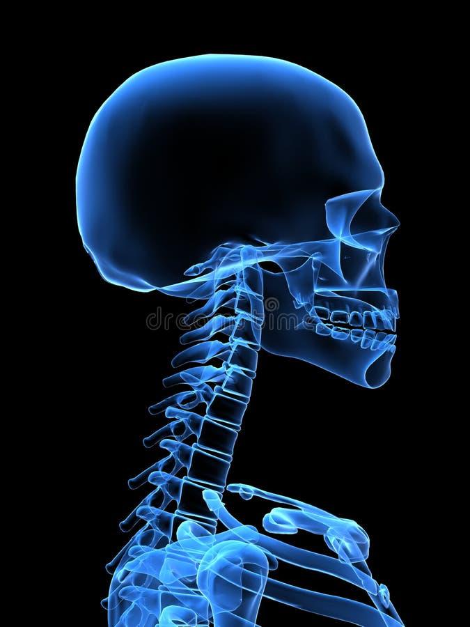 Pista de la radiografía libre illustration