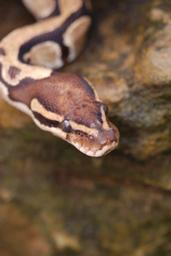 Pista de las serpientes imagenes de archivo