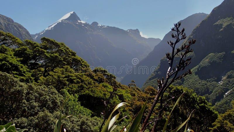 Pista de Milford, Nueva Zelanda. imagen de archivo libre de regalías