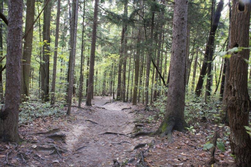 Pista de senderismo, bosque del estado de las colinas de Hocking imágenes de archivo libres de regalías