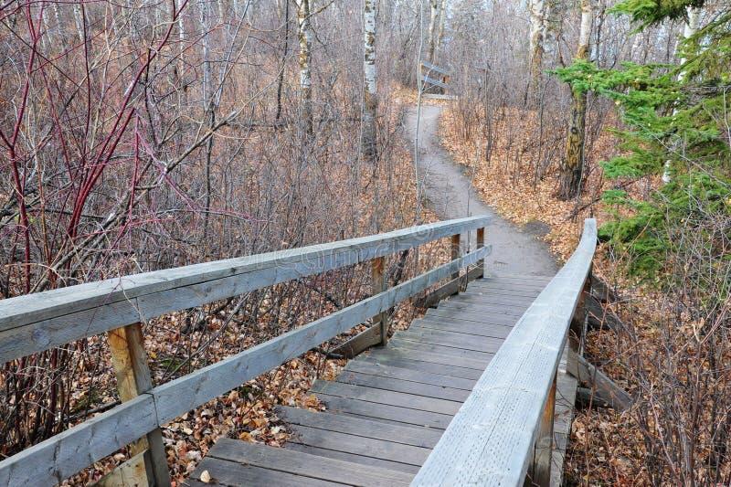 Pista de senderismo de enrrollamiento en bosque fotografía de archivo