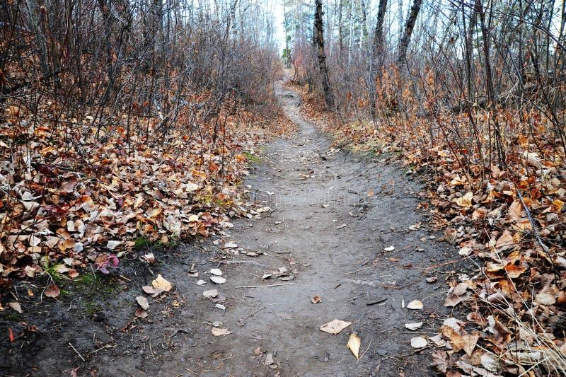 Pista de senderismo de enrrollamiento en bosque imágenes de archivo libres de regalías
