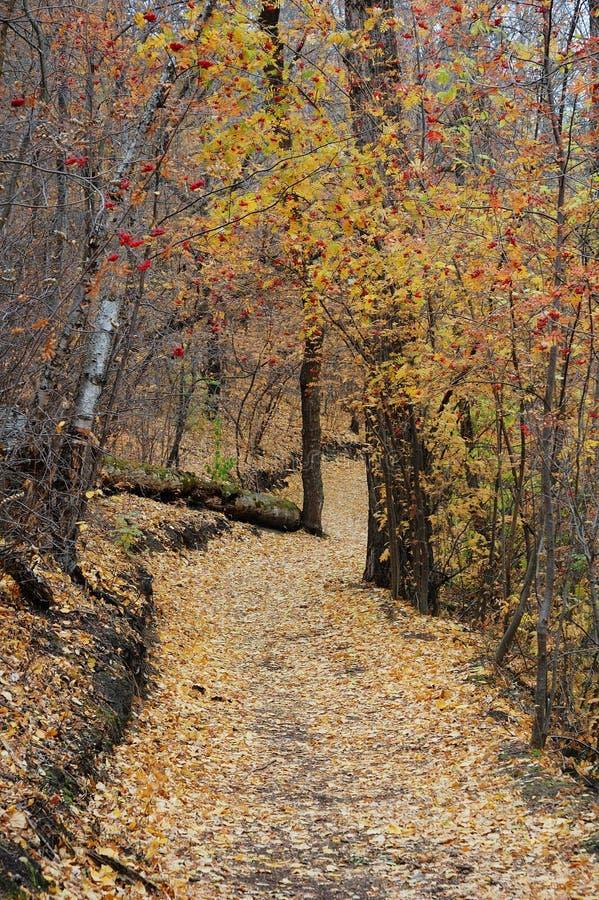 Pista de senderismo de enrrollamiento en otoño imágenes de archivo libres de regalías