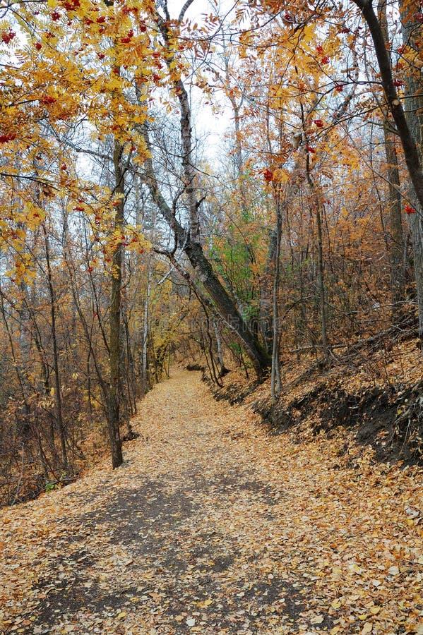 Pista de senderismo de enrrollamiento en otoño fotos de archivo