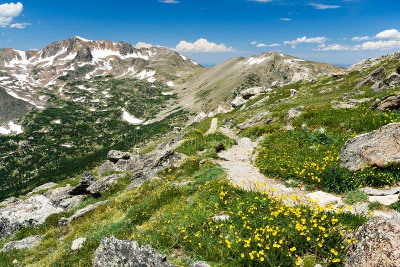 Pista de senderismo de la montaña a través de Wildflowers imágenes de archivo libres de regalías