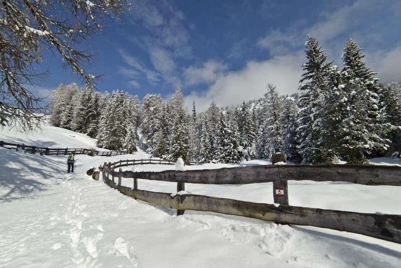 Pista de senderismo del invierno, después del nevadas imágenes de archivo libres de regalías