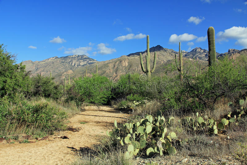 Pista de senderismo en barranco del oso en Tucson, AZ fotos de archivo